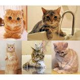 """エド・シーランを""""ネコ""""たちが応援 「チーム・エドシーニャン」Instagramで楽曲動画を投稿"""