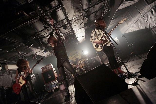 piggy-live.jpg