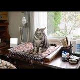 『グーグーだって猫である2』、猫たちのオフショットとらえたスペシャル動画公開