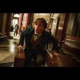 『ファンタスティック・ビースト』新映像、『ハリポタ』シリーズ原作者J・K・ローリングが解説