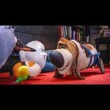 『ペット』特別映像公開 老犬・ポップスがペットたちを秘密のルートへと案内