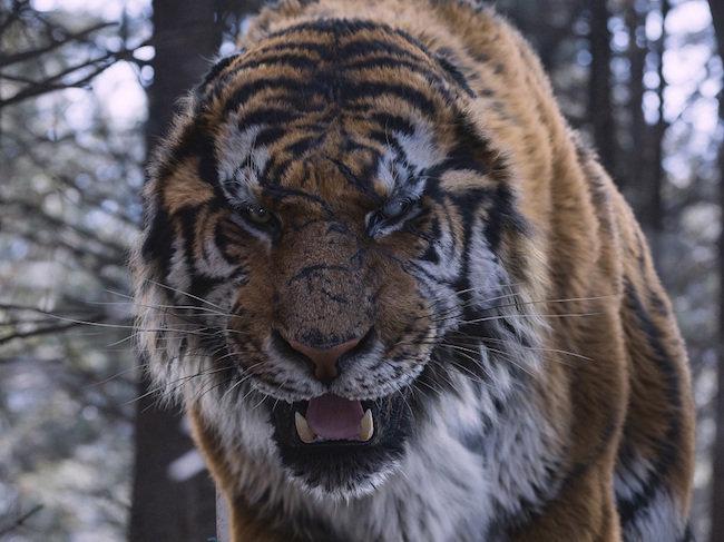 20160826-TIGER-SUB03.jpg