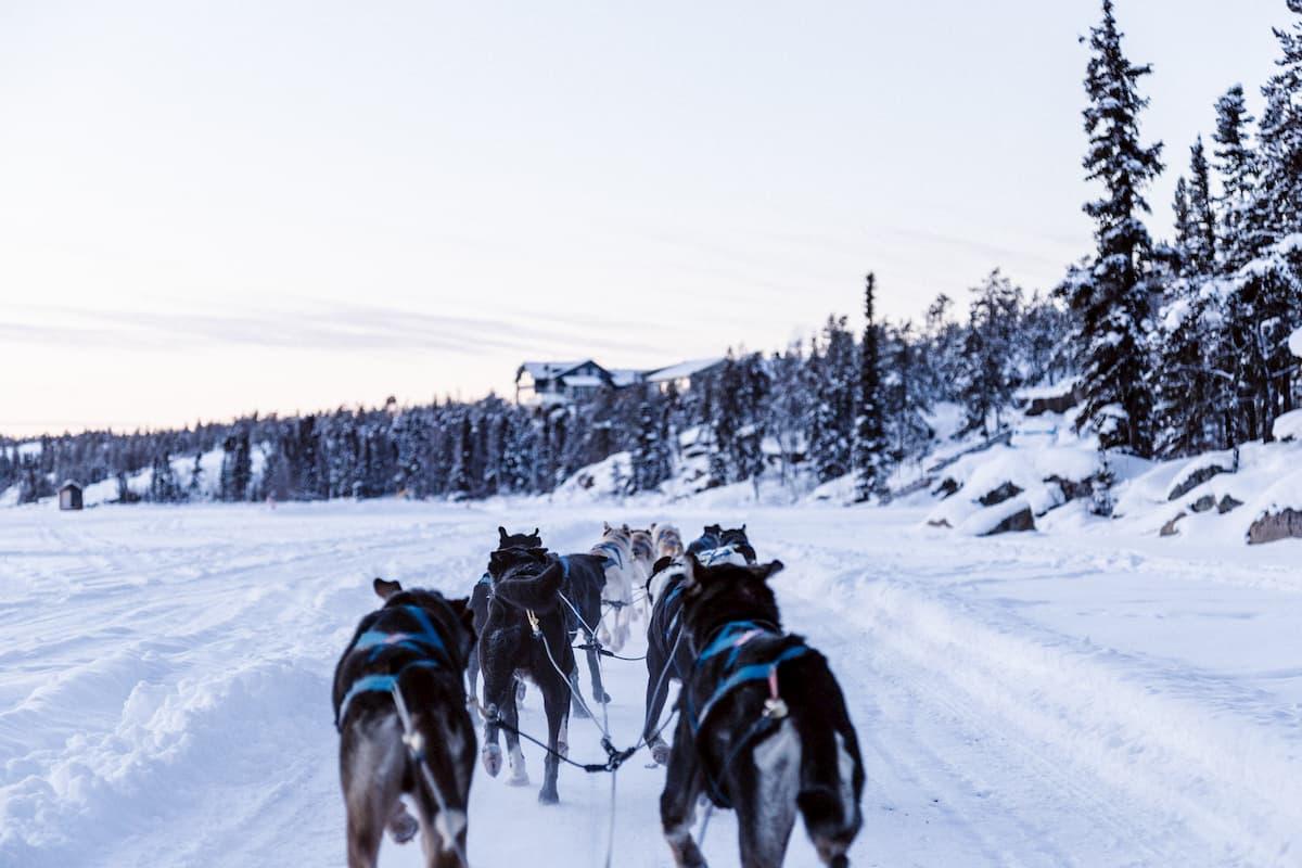 不運の大型犬は、いかにして橇犬チームをまとめた? 名著『野性の ...